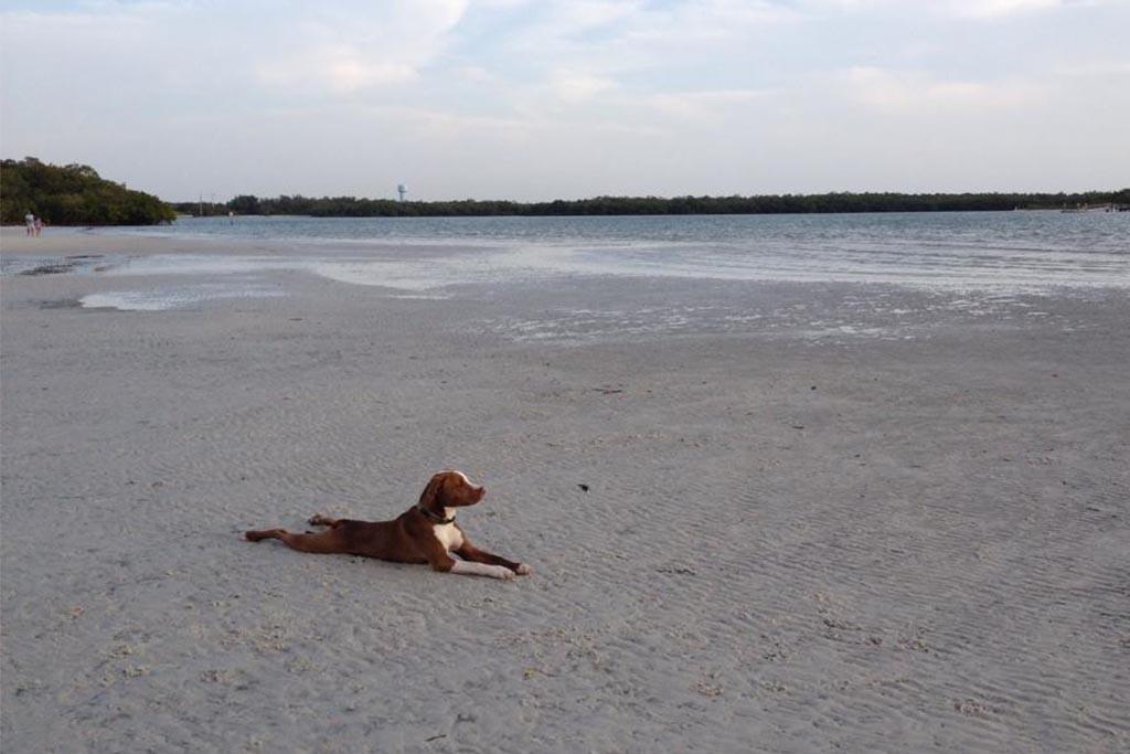 Rehoboth-Beach-pet-friendly-hotels