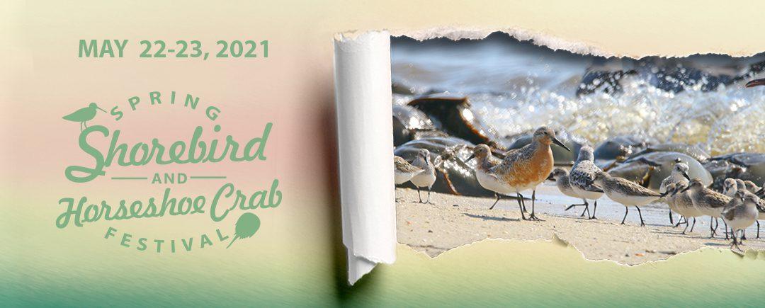 Horseshoe Crab & Shorebird Festival